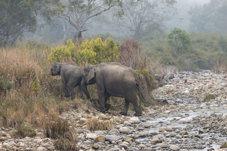 Side view of elephant walking in forest