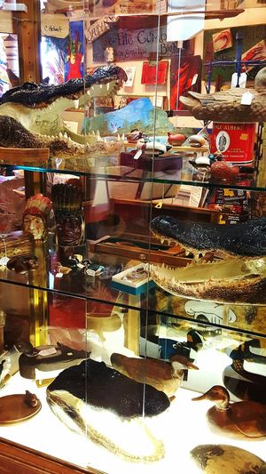 store display Variation No People South Louisiana Gators! Retail Design Retail Life  Miscellaneous Goods Art And Craft