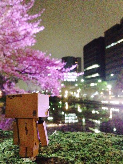 sakura Flowers danbo ダンボー