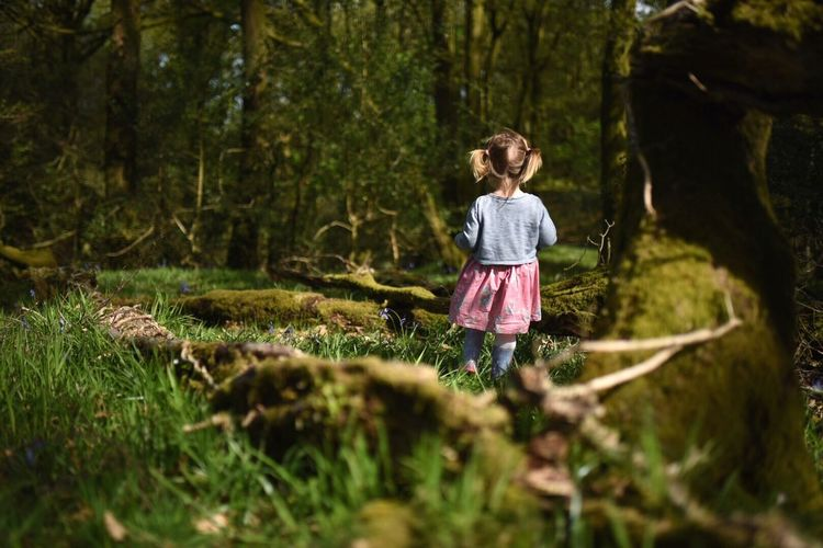 Rear view of girl standing in forest