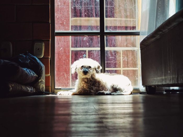 Dog sitting by window at home