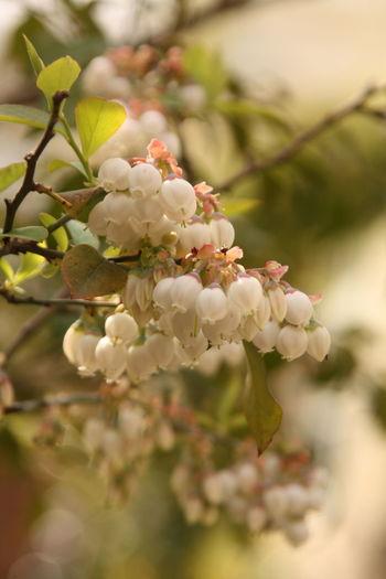 Close-up of flowering tree in bloom