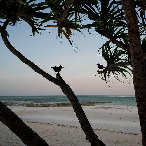 View of bird on beach against sky