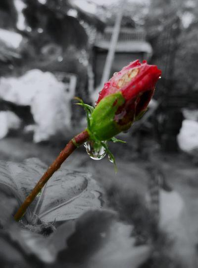 Close Up/ After The Rain / Meizu M1 Note / Photo Studio