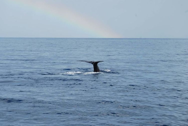 Whale Watching Rainbow Dominica