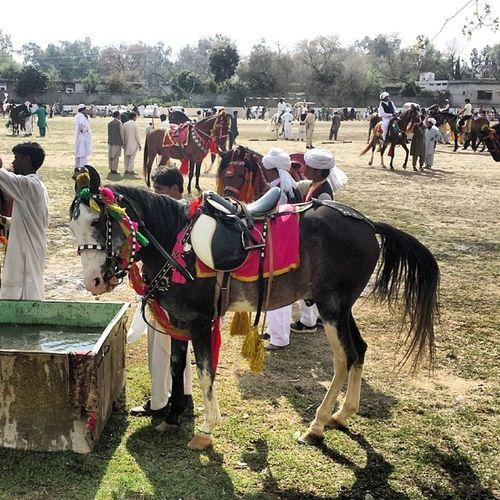 Attock Tent Pegging Mela. Attock Horsedance Horse Mela pakistan tentpegging naizabazzi campbelpore