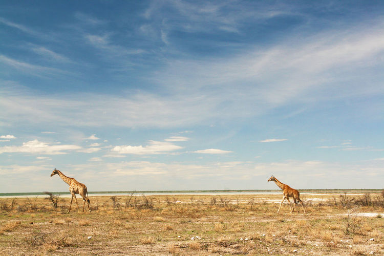 Africa Baby Animals Beauty In Nature Blue Calm Cloud Cloud - Sky Escapism Etosha Giraffe Namibia Nature Non-urban Scene Outdoors Remote Scenics Sea Shore Sky Solitude Tranquil Scene Tranquility Vacations Walking Wildlife