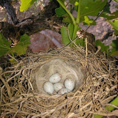 Animal Nest Egg