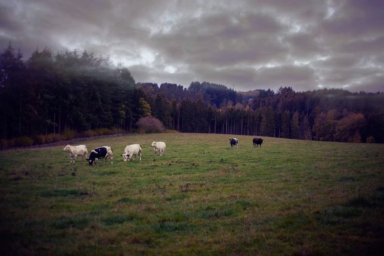 Ardennes by