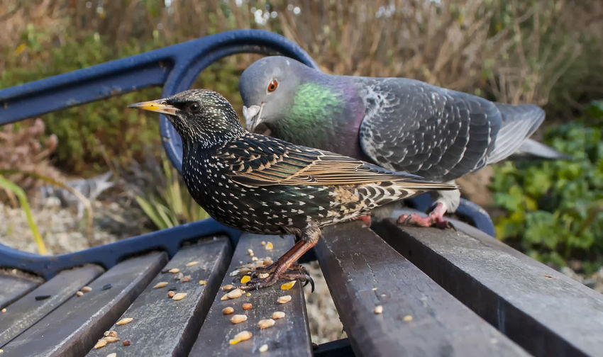 Birds perching on park bench