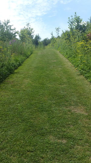 Green Color Grass Growth Tree Nature Day Sky No People Field Outdoors Beauty In Nature Freshness Pathway Pathway To Heaven Path Mown Grass Wildflowers Wild Flowers Sommergefühle EyeEm Selects