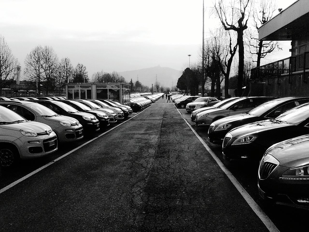 transportation, car, land vehicle, mode of transport, in a row, tree, road, bare tree, day, stationary, no people, outdoors, built structure, architecture, sky