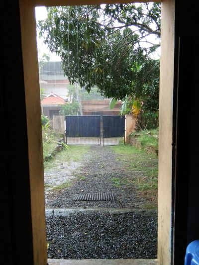 Rain Raining Season Nature Beautifulinnature Naturalbeauty Photography Landscape Looking Through The Window Urban Lifestyle Daylight
