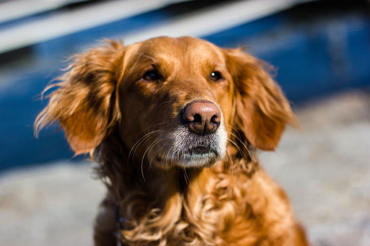 Close-up of brown dog on sunny day