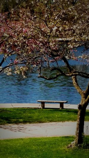 Tree Nature Water Growth Sunlight No People Freshness Tranquility Branch Grass Beautiful Springtime Tree Beauty In Nature Day Outdoors Landscape Relaxing Moments Sceneries  Great Day Out Relaxing