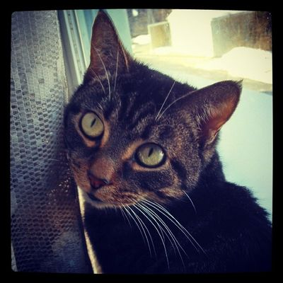 Those eyes Alice Catsofinstagram Loveher Beautiful