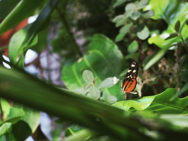 Butterfly Rainforest Jungle