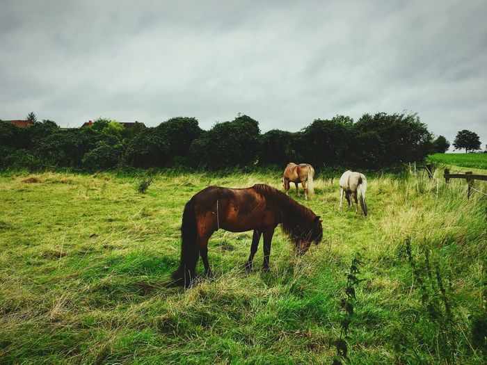 Domestic Animals Animal Themes Mammal Field Horse Grass Tree Nature Grazing Livestock Sky Tranquility Tranquil Scene No People Landscape Green Color Day Beauty In Nature Cloud - Sky Outdoors EyeEm Gallery EyeEmNewHere Eye4photography  Eyeemphotography EyeEm
