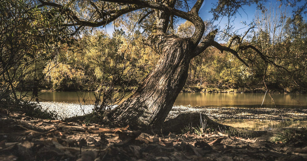 Baum Water