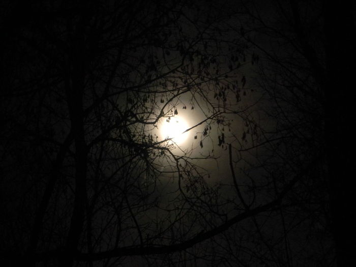 Bare Tree Beauty In Nature Bird Branch Bright Night Day Full Moon Haunted Haunted Woods Low Angle View Moon Moon Light Moonlight Nature No People Outdoors Scenics Silhouette Sky Sun Supermoon Tranquil Scene Tranquility Tree