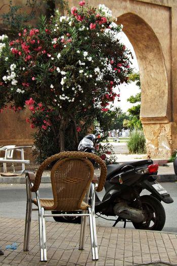 Motorcycle Plantes Carreaux Chaise Day Fleurs Historique Mammal Maroc Moto Nature No People Outdoors Pets Plein Air Porte Roses Sol Terrasse Tree Ville Ancienne