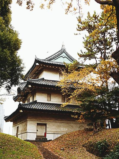 皇居東御苑 Japan Tokyo Days EyeEm Nature Lover