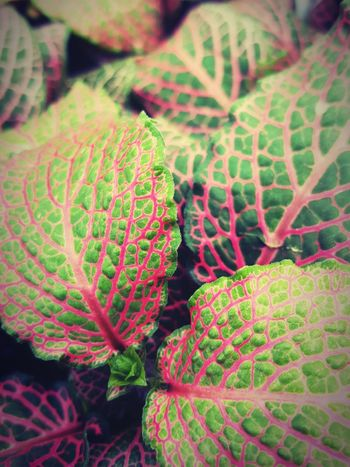 Strange Green Leaves Pink Pinkishiscolor Nature_collection Nature Photography Wonder Nature Beauty Relaxing Original Experiences Original Photography Nature Photographer Nature Heals