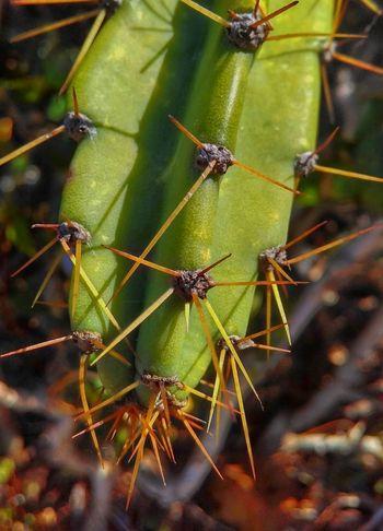 Green Color Nature Close-up Bush Bushes Bushfire Bush Fire Cactus Cactusplants Close Up Close Up Nature
