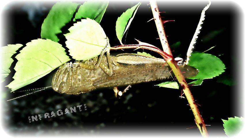 Infraganti III Photography Nature_collection Eye4photography  EyeEm Best Shots