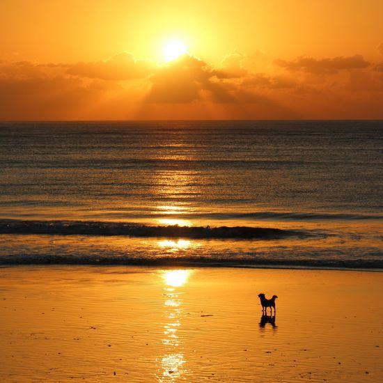 Sonnenuntergang am Strand in Bali Sunset Dog Bali INDONESIA Beach Strand Chilling Orange Color Sea Holiday InterContinental First Eyeem Photo Sommergefühle