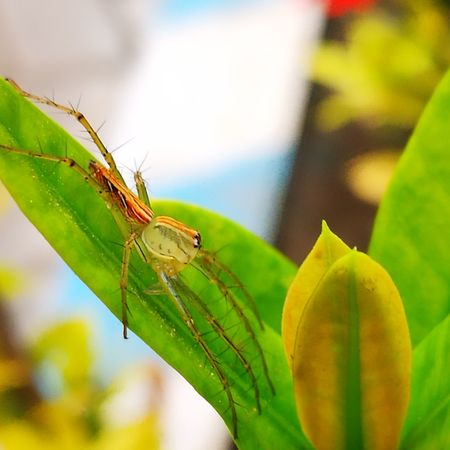 waiting for lunch #spider#wildlife #NoFilter #macrophotography #macrokindom Leaf Insect Animal Themes Green Color Plant