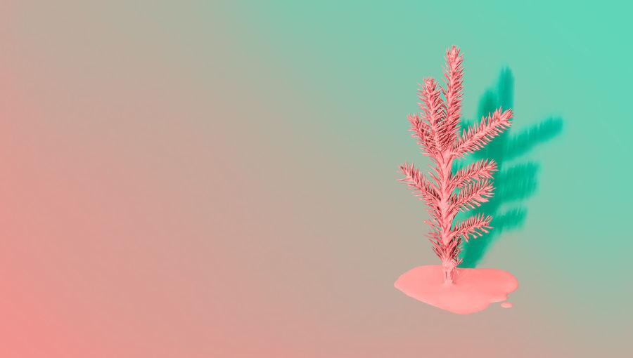 Plant against blue sky