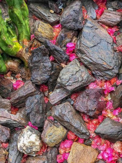 Rocks flowers