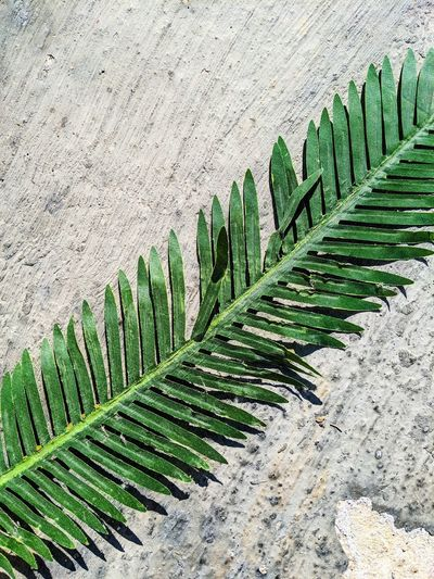 High angle view of palm leaves against wall