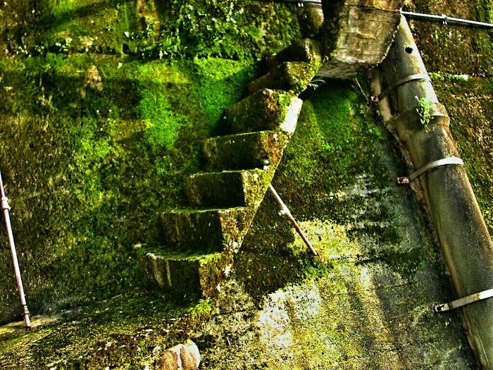 Stairways 意味がない階段……超芸術 トマソン♪(*'艸`) Taking Photos Enjoying Life Moss Japanese  Japanese Style 無意味 EyeEm Best Shots EyeEm Best Edits