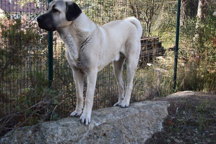 Dog Domestic Animals One Animal Animal Themes Pets Mammal Standing