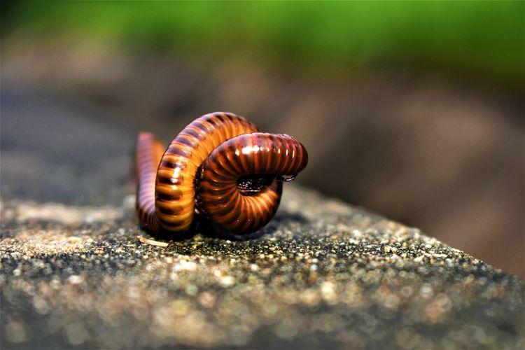 Close-up of centipede on rock