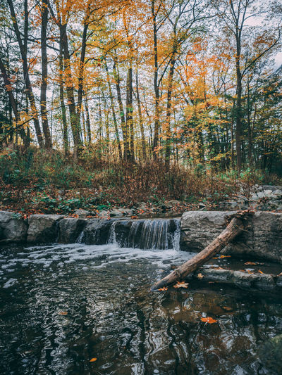 Autumn Bare Tree Beauty In Nature Day Forest Motion Nature No People Outdoors River Scenics Stream - Flowing Water Tree Water Waterfall