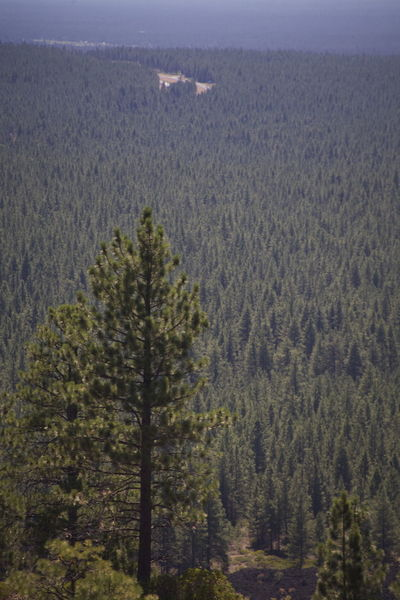 Bend Clear Sky Green Nature Oregon Trees Beautiful Oregon Beauty In Nature Breathe Day Endless Trees Forest Landscape Lava Butte Lava Rocks Many Trees Natures Beauty No People Outdoors Scenics Trees For Miles Treescape Wilderness Woods Woodscapes