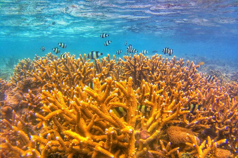 The coral reefs Water Sea Animal Wildlife Underwater Animal UnderSea Animals In The Wild Animal Themes Nature Large Group Of Animals Invertebrate Vertebrate Group Of Animals Sea Life Coral Beauty In Nature Reef Marine No People Outdoors