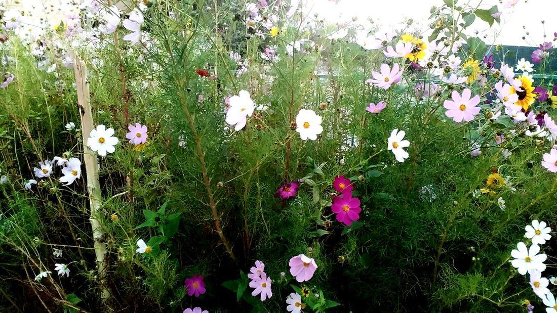 Цветы у магазина Beauty In Nature Flower Growth Freshness Plant Nature Green Color Outdoors Springtime Wildflower