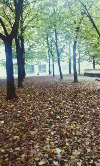 Wild Wood Three Quarter Length October Wakemeup Shadows EyeEm Italy Autumn Colors Autumn🍁🍁🍁