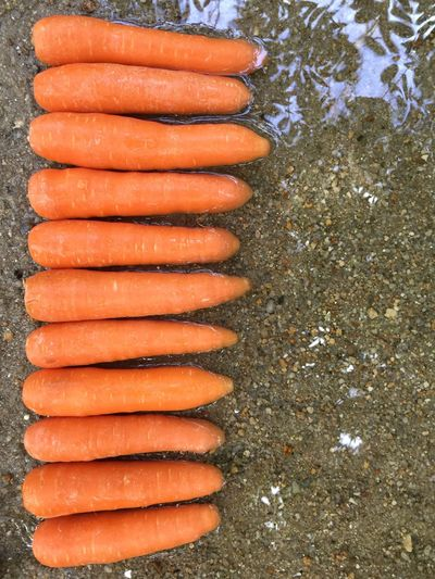 Teamwork High Angle View Food And Drink Food No People Freshness Orange Color Arrangement Abundance Beach Nature Root Vegetable Large Group Of Objects Outdoors Wellbeing Healthy Eating Carrot Directly Above Day In A Row Land