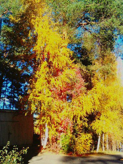 Nature Colour Of Life Enjoying Life