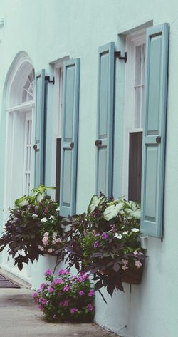 Pastel colors on the rainbow 🌈 rd . Charleston Sc Flower Door Closed Plant Architecture House Day Outdoors No People Fragility Building Exterior Nature Summertime Charleston ❤ Travel Destinations Window City Charleston South Carolina