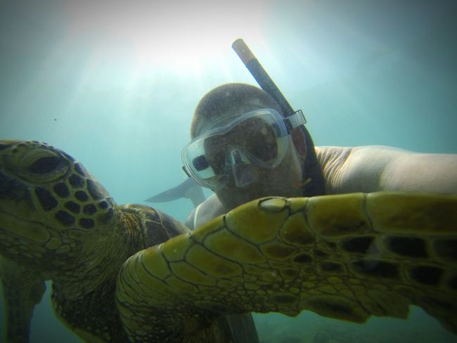 Underwater Adventure One Person Adults Only One Man Only People Animal Themes UnderSea Day Only Men Close-up Scuba Diving Snorkeling Adult Sea Life Outdoors Done That. Second Acts EyeEm Ready