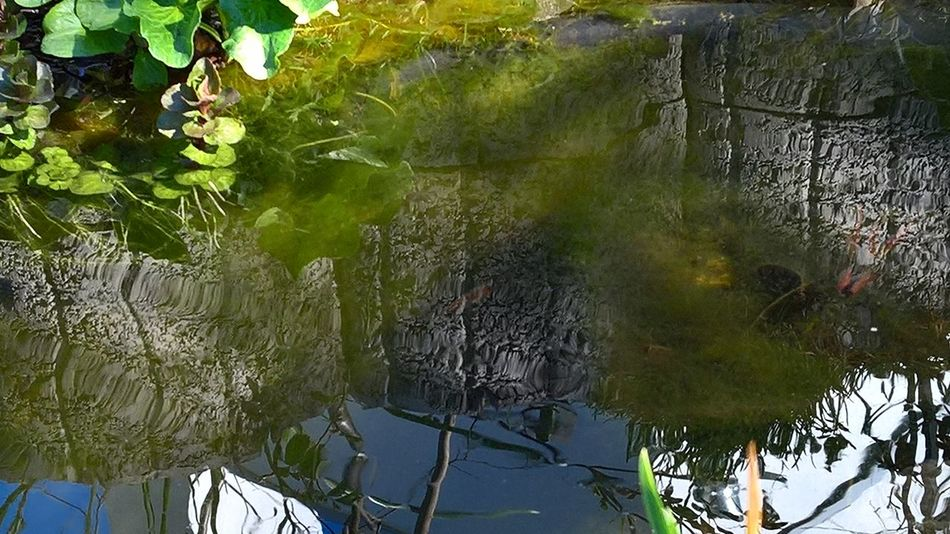 Pond Wall Water Reflections Beauty In Nature Day Growth Nature No People Outdoors Plant Reflecting Sky Tree Wall Reflected In Water Water Water Landscape Water Landscape Reflet Water Plant