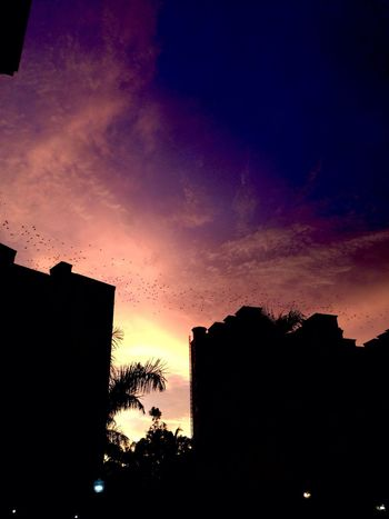 Silhouette Sky Sunset Architecture Built Structure Nature Building Exterior Cloud - Sky Tree Plant Outdoors No People Orange Color Building Low Angle View Beauty In Nature Scenics - Nature Dramatic Sky Tranquility City