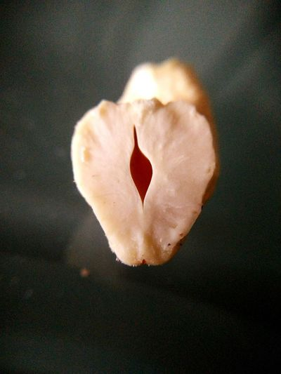 Heart Shape Close-up Love Artistic Photography Artistic Expression Food And Drink Artistic Natural Beauty Expression Dryfruit Cachew Nut