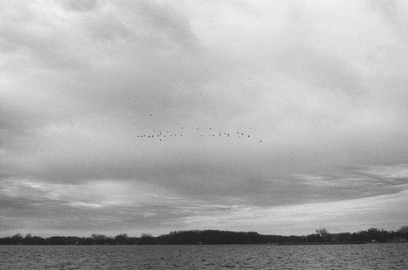 Birds flying over the sky
